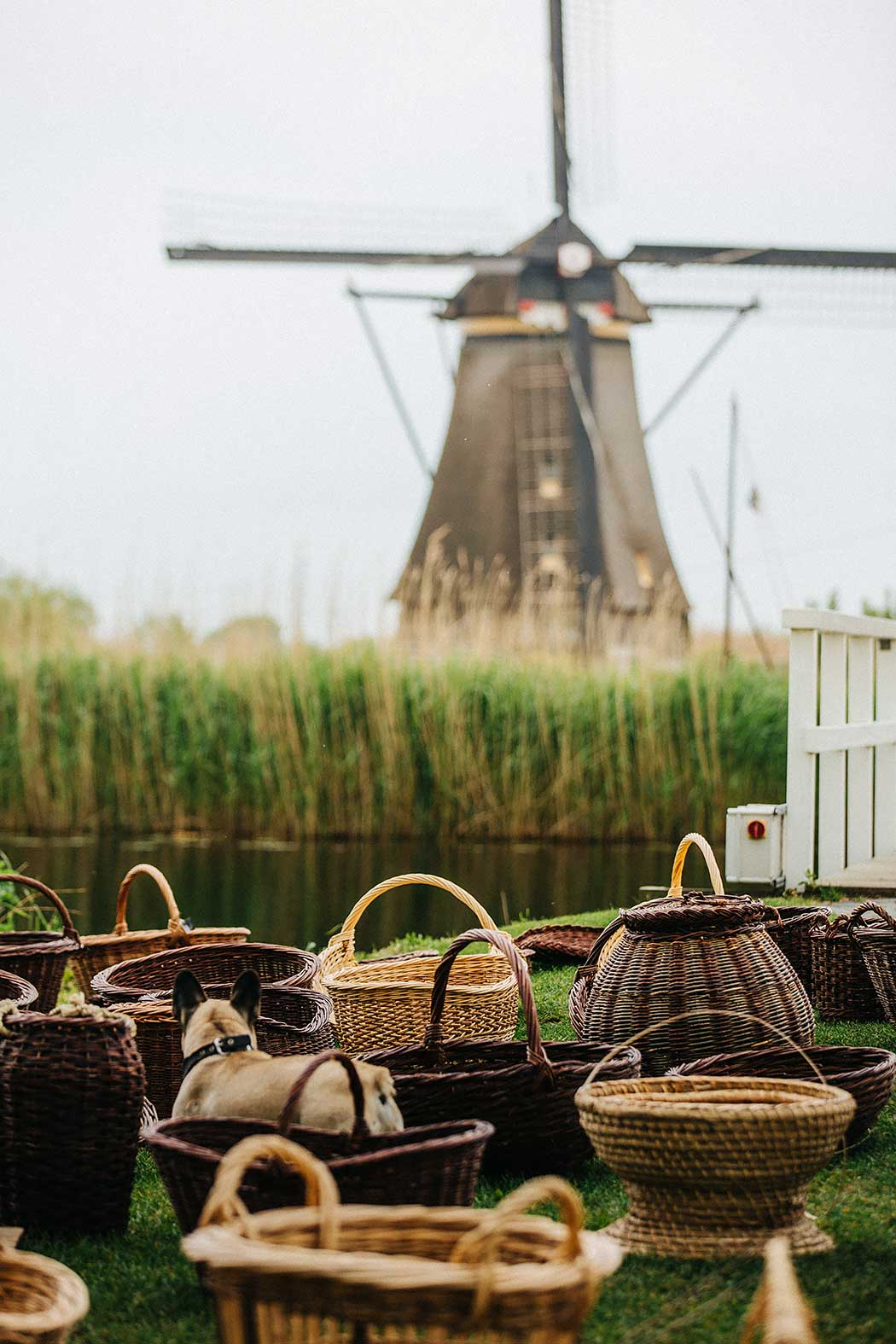 Best Day Trip from Amsterdam Dutch Windmill Kinderdijk