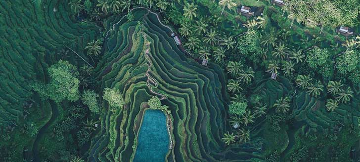 Best Things to Do in Bali- Indonesia Ubud Rice Terrace