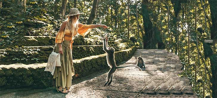 Best Things to Do in Bali Sacred Monkey Forest Ubud