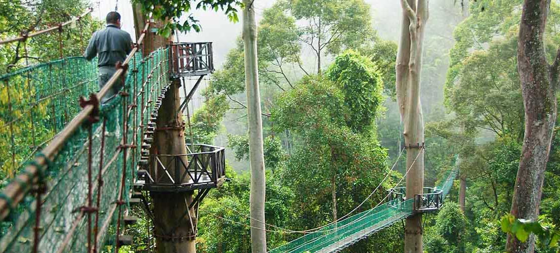 Best Things to Do in Indonesia Wildlife Adventure - Rainforest Canopy Walk Kalimantan
