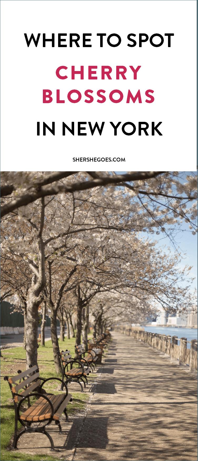 NYC Cherry Blossom guide shershegoes.com