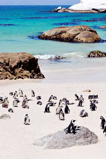 best time to visit san cape town for affordable hotel
