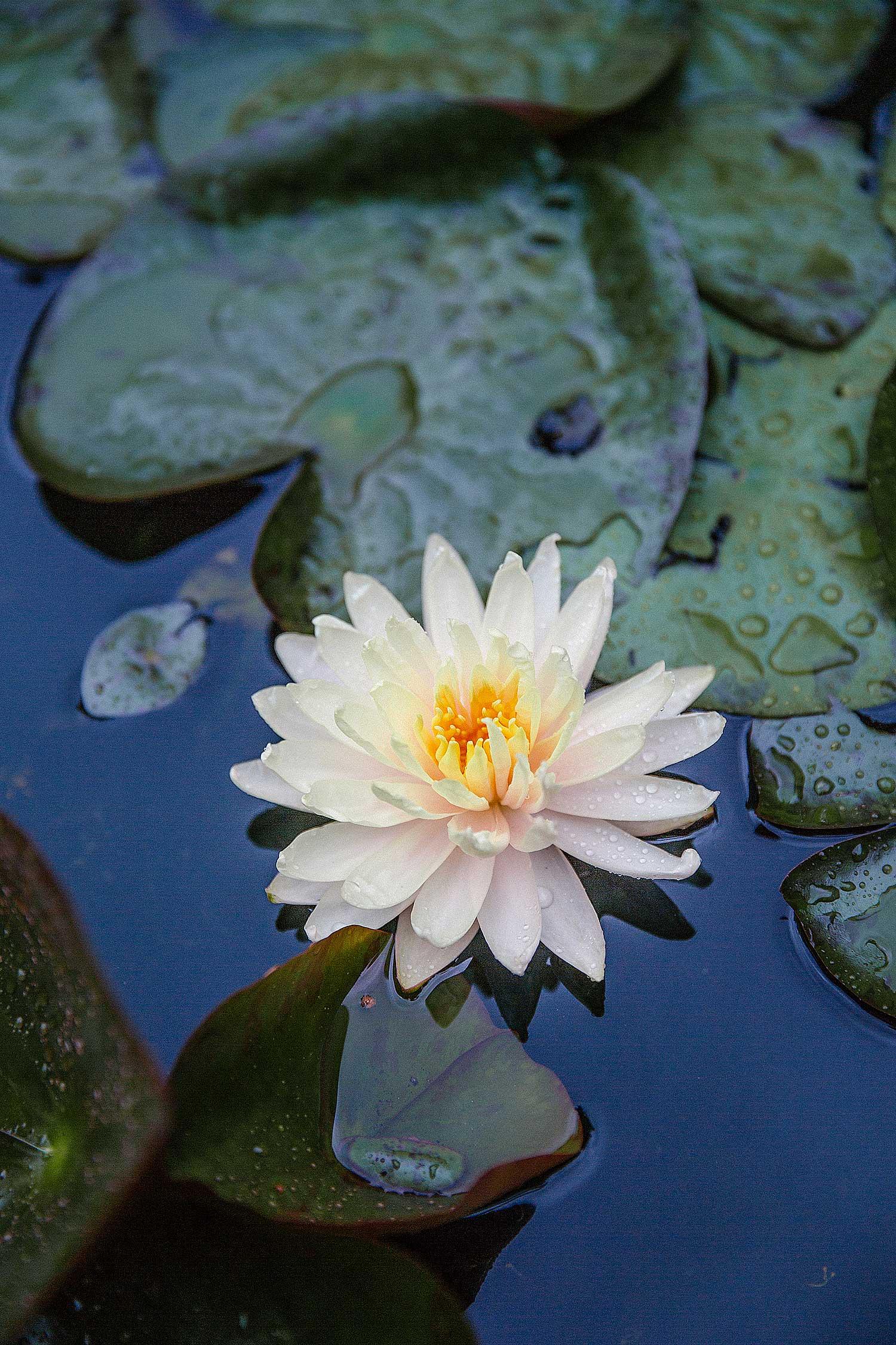 Villa Taranto Botanical Gardens Lake Maggiore Italy