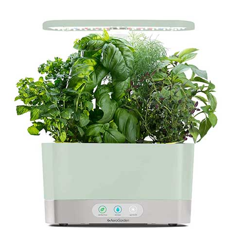 aerogarden-hydroponics