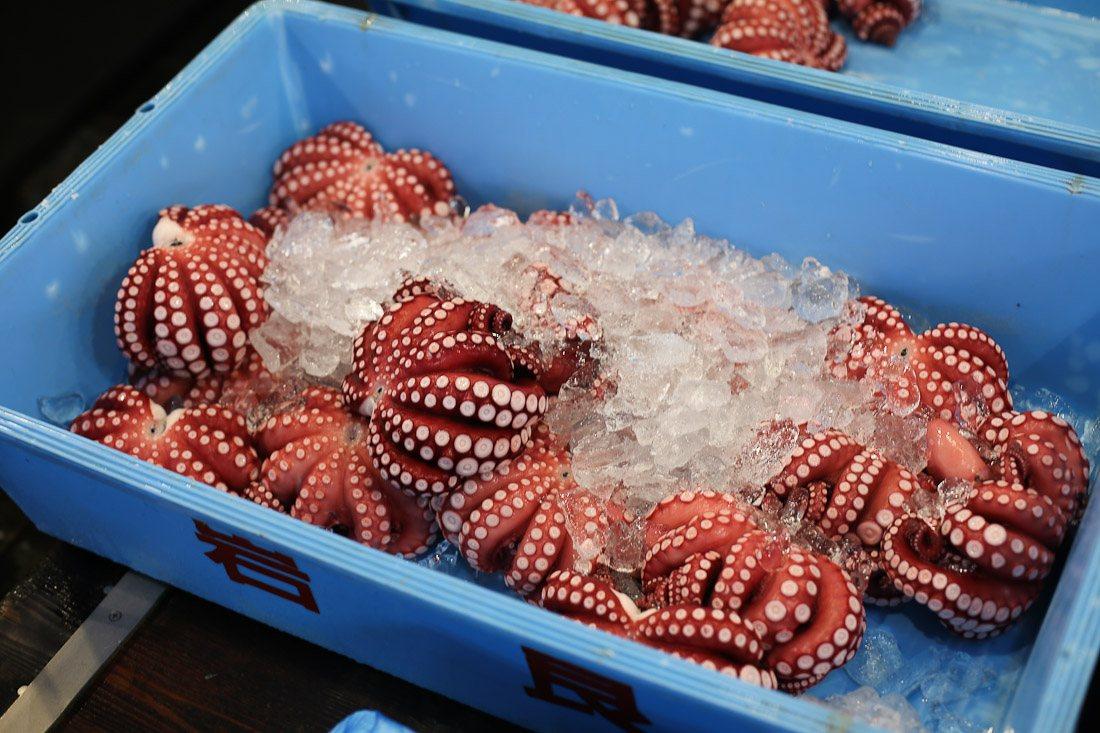 japan-tokyo-tsukiji-fish-market-tuna-octopus-shershegoes.com (3)