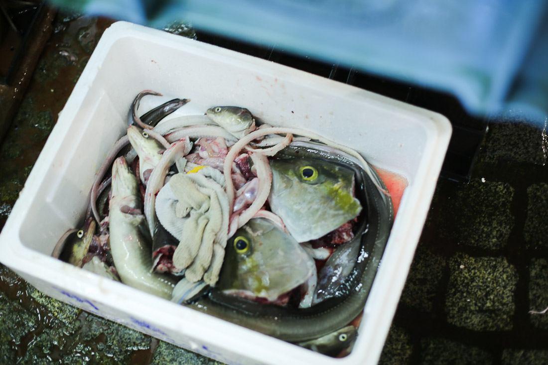 japan-tokyo-tsukiji-fish-market-tuna-octopus-shershegoes.com (5)