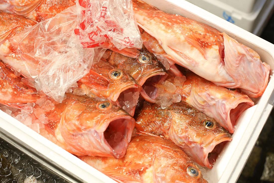 japan-tokyo-tsukiji-fish-market-tuna-octopus-shershegoes.com (7)