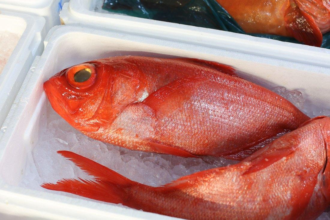 japan-tokyo-tsukiji-fish-market-tuna-octopus-shershegoes.com (9)