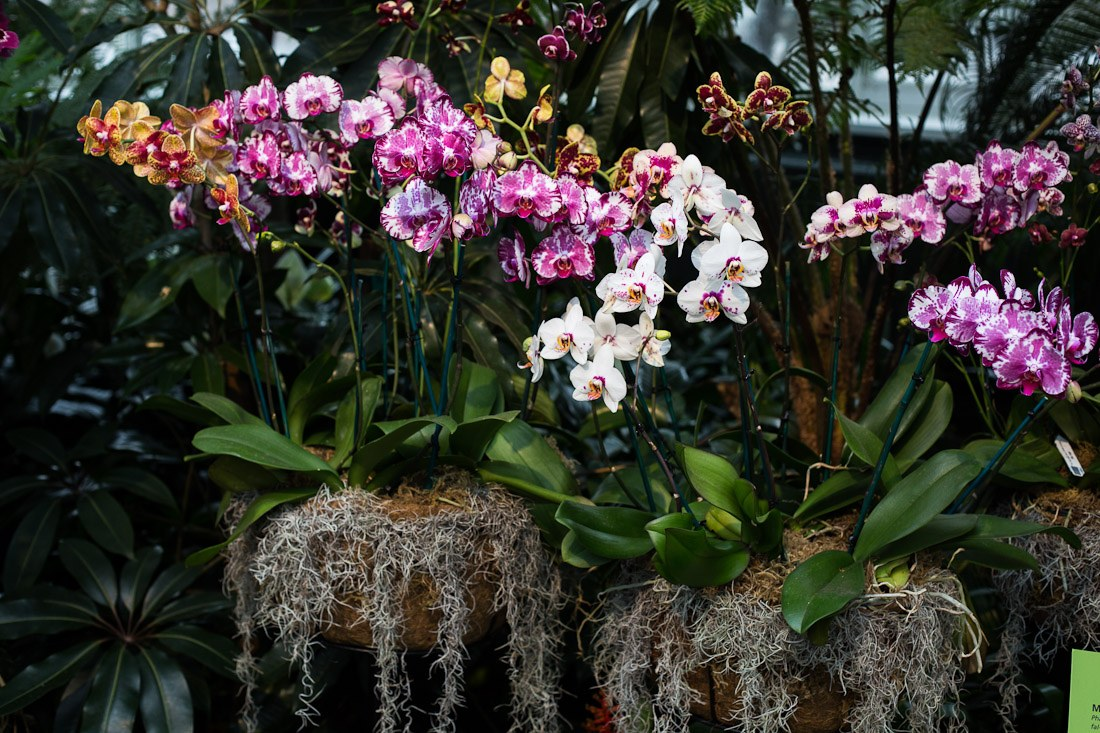 new-york-botanical-garden-spring-key-west-orchid-show-2014-flower-plant-garden-cactus-succulent-photo-shershegoes.com (3)