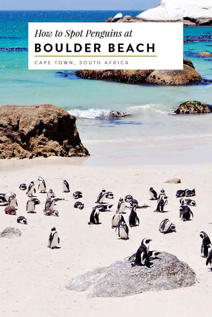 penguins-at-boulders-beach-cape-town-south-africa