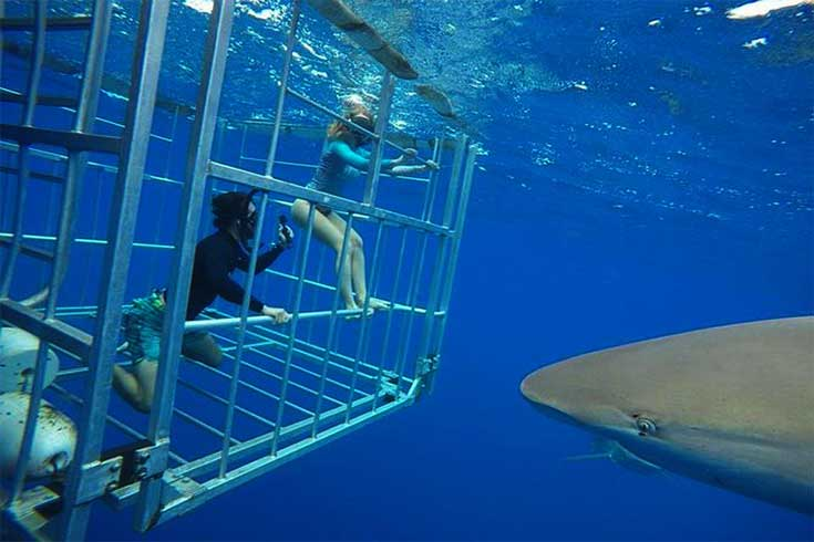 shark-cage-diving-on-oahus-north-shore