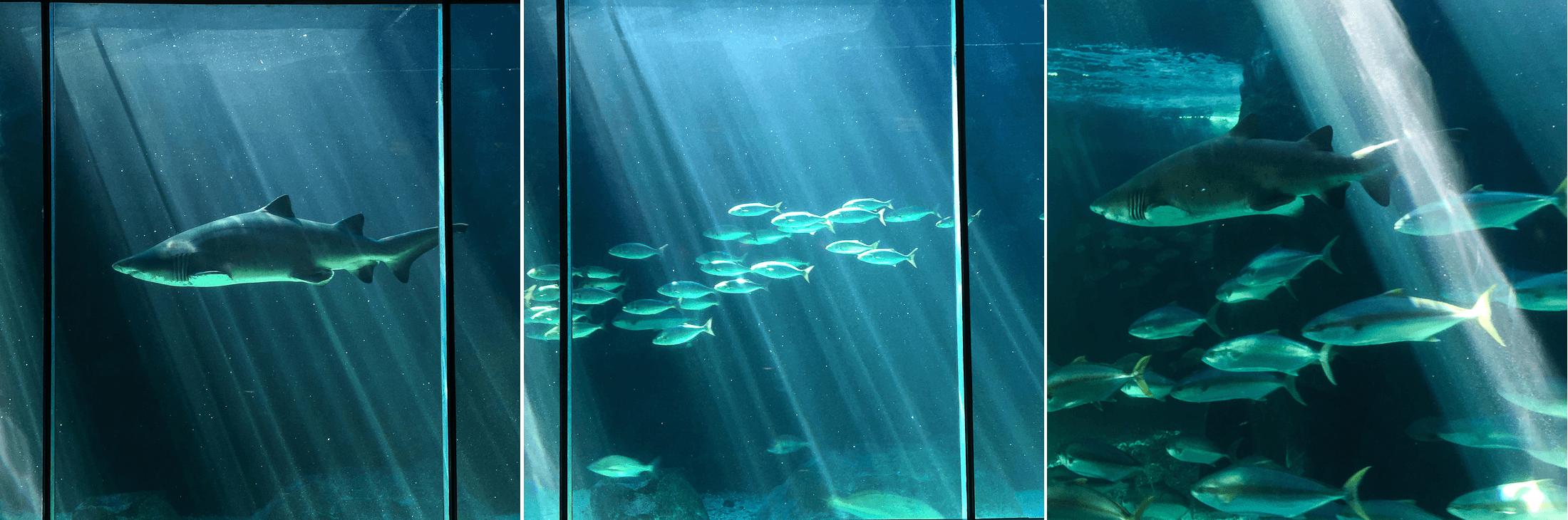 south africa cape town two oceans aquarium diving sharks penguins victoria