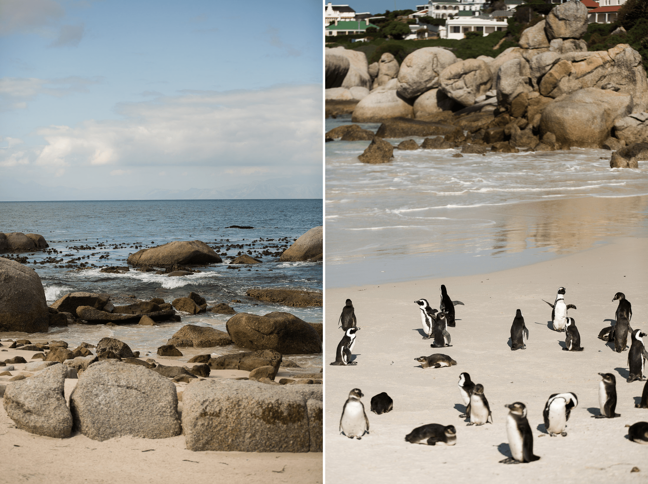 south africa cape town travel guide boulder beach penguin sanctuary sher she goes shershegoes.com (2)