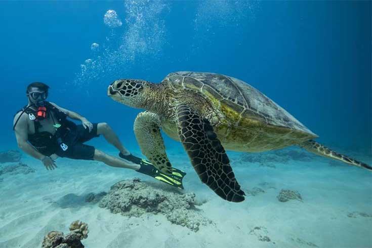 swim-with-sea-turtles-in-oahu