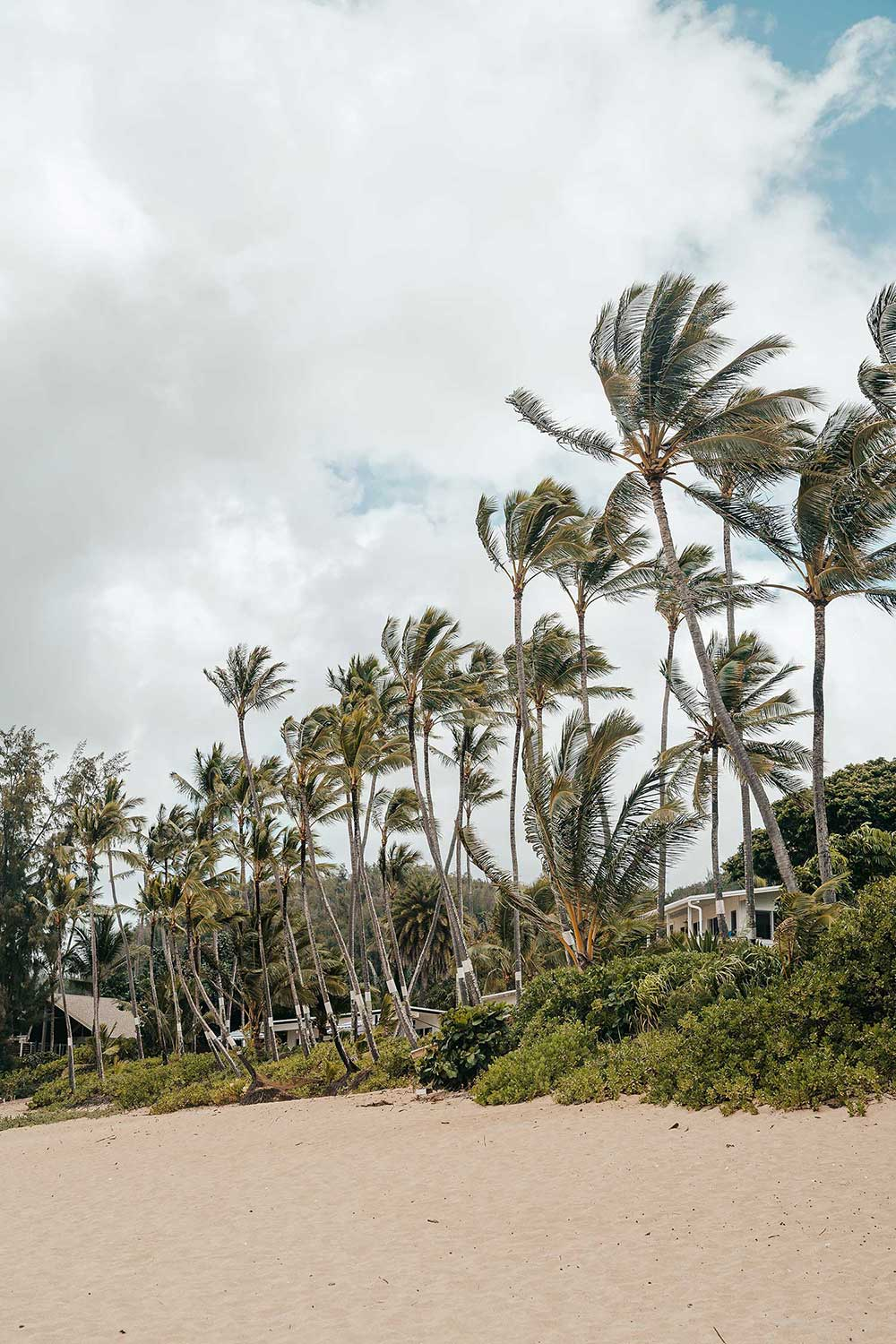 things-to-do-on-the-north-shore-oahu-hawaii