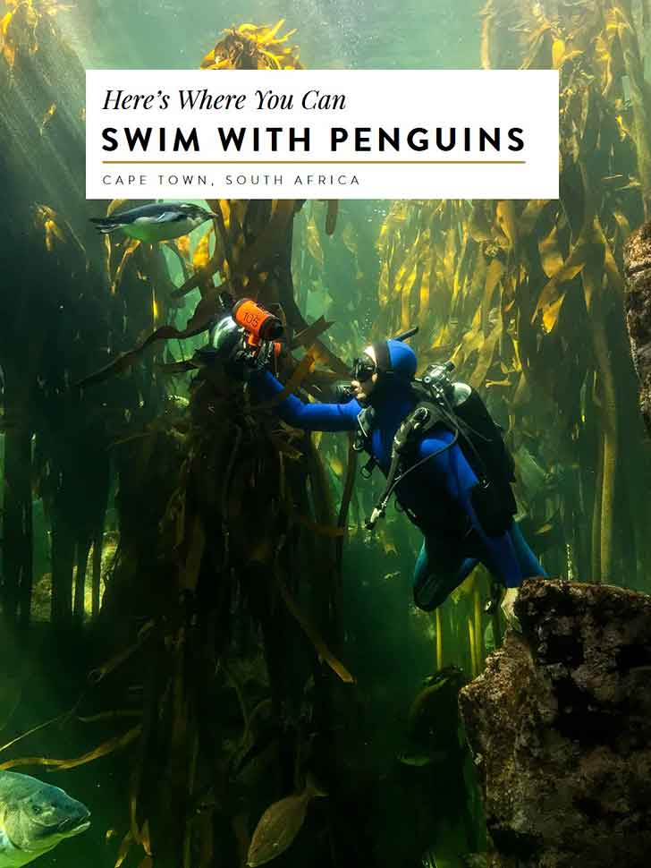 where-to-swim-with-penguins-and-sharks-in-cape-town-south-africa